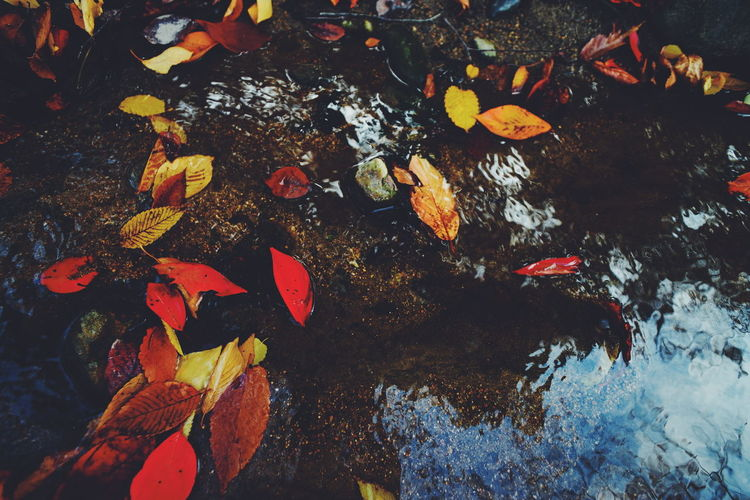 High angle view of fallen autumn leaves on stream