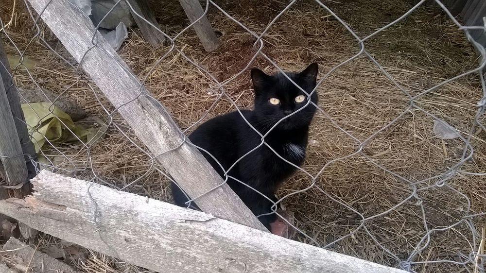 Cat Black Cat Net EyeEm Best Shots Open Edit Cat Collection Taking Photos Animals