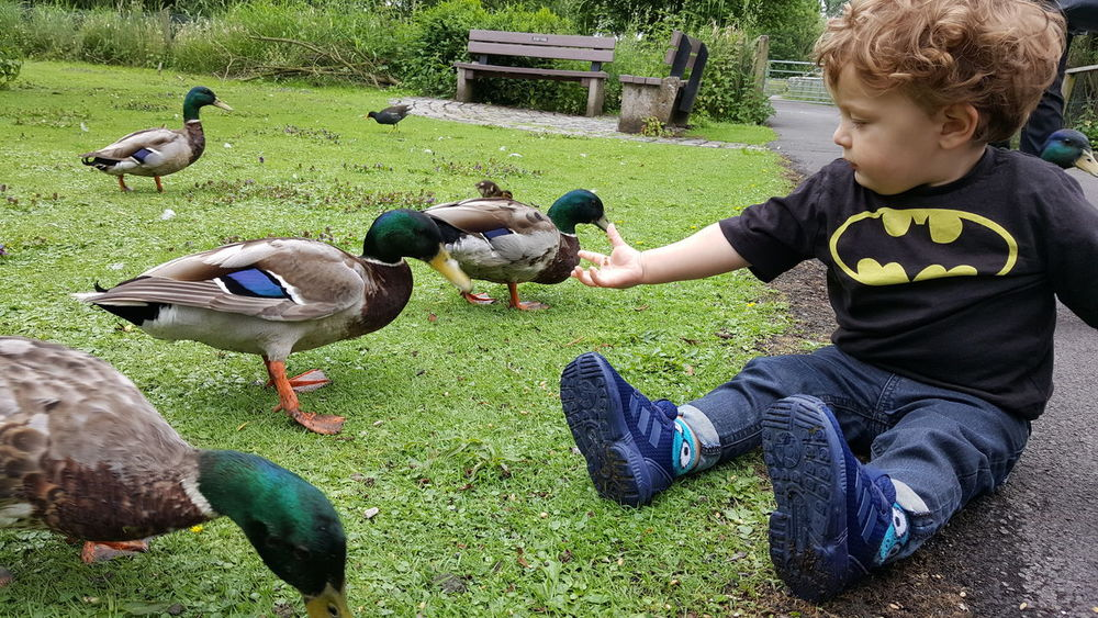 Hanging Out Taking Photos Check This Out Enjoying Life Ornithology  Ducks Southport Feeding Ducks Nature Martin Mere