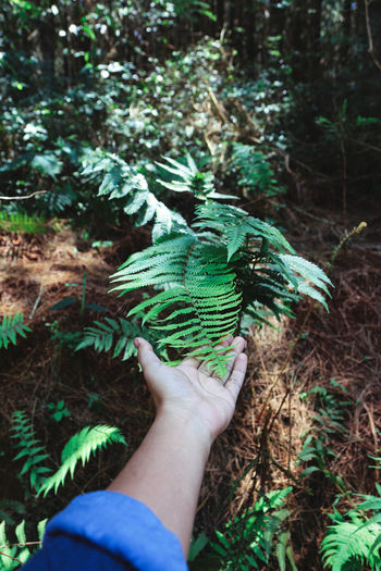Midsection of person holding tree in forest
