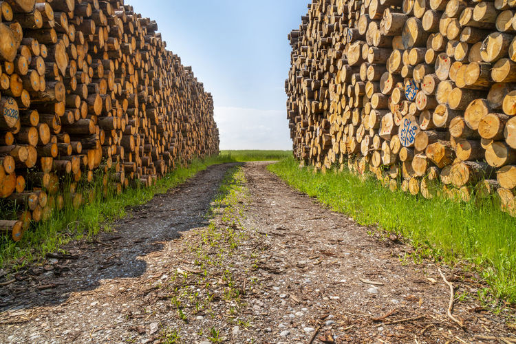 View of logs in the forest