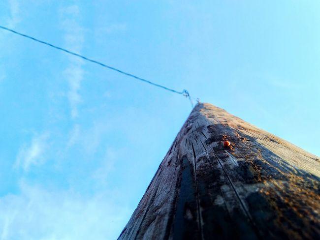 Ladybug Lightpole Wood Pole Wooden Pole Sky Bulesky Li Sky Architecture Building Exterior Built Structure Bad Condition Weathered
