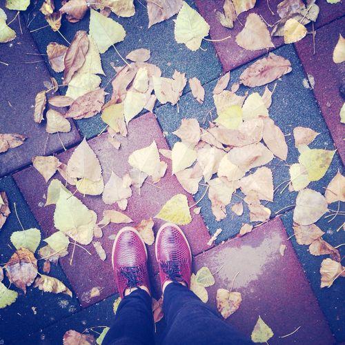 ????? Autumn Shoes