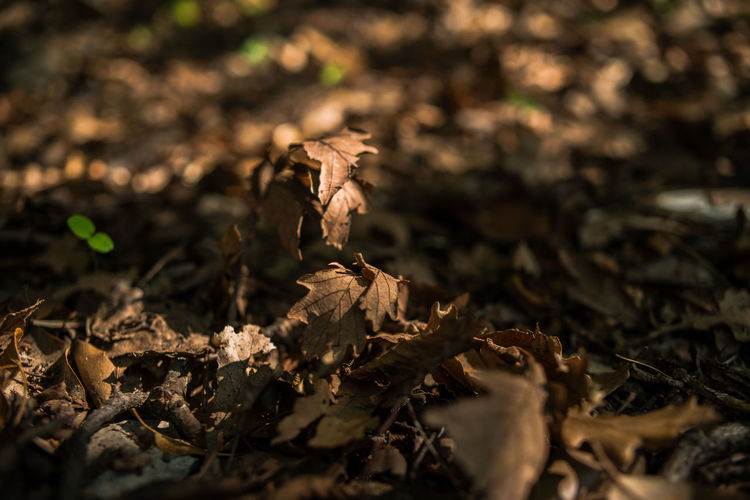 Autumn Dry Leaves Portofino Natural Regional Park Close-up Day Dry Fragility Growth Leaf Liguria Nature No People Outdoors Plant Selective Focus