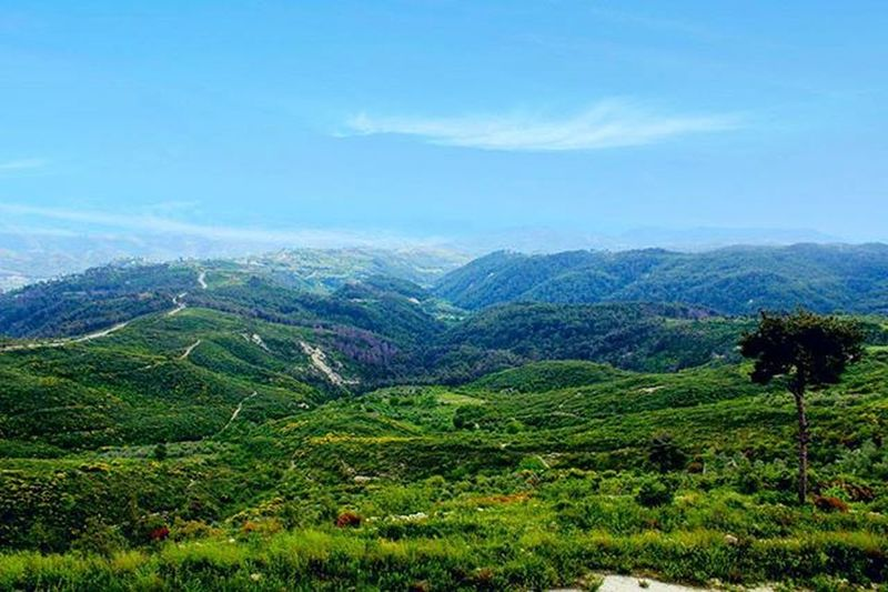 ربيعة _ جبل التركمان ب 13 / 5 / 2015 تصوير 📷 @ayhm_abdulwli ____________________ Syria  Lattakia Photo Photooftheday Photographer Spiring Summer عدستي تصويري  سوريا Montain  Montains    Livelovesyria
