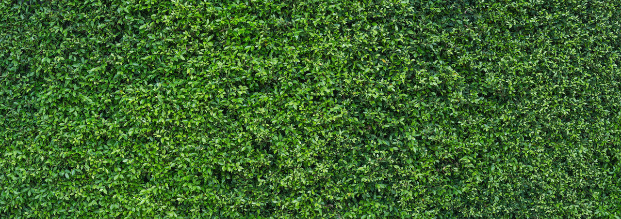 Green Color Backgrounds Full Frame Plant Grass Sport Lawn Lush Foliage Nature Foliage Playing Field American Football Field Textured  No People Beauty In Nature Field Environment Soccer Turf Stadium Outdoors Green - Golf Course Green Green Color Freezing