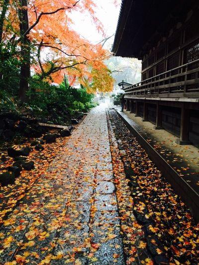 rain 秋
