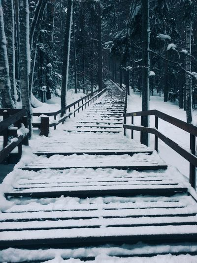 Snow Covered Walkway In Winter