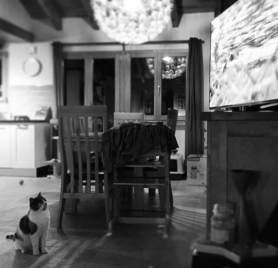 Black & White Cat Watching TV Blackandwhite Cats Cats As Humans Indoors