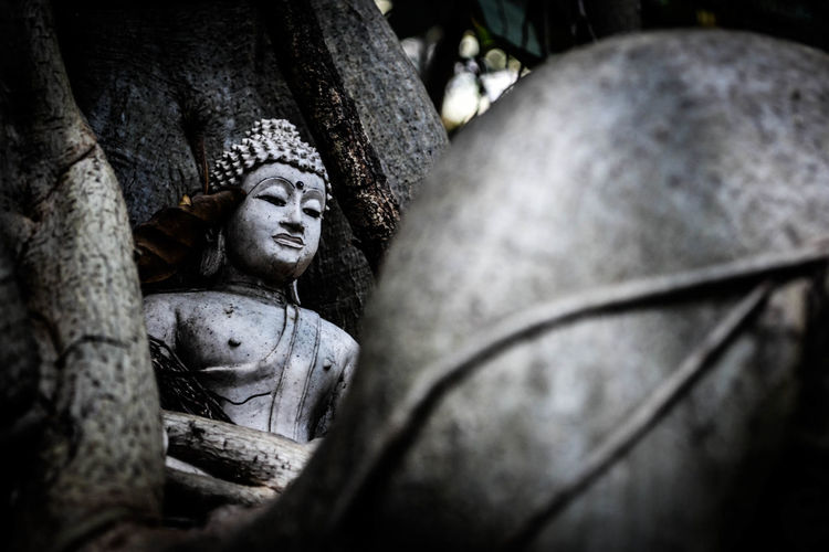buddha and tree Ancient Close-up Day Human Representation No People Outdoors Place Of Worship Religion Sculpture Selective Focus Spirituality Statue Tree