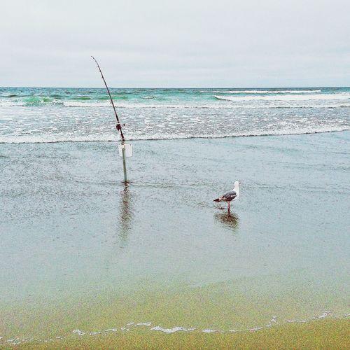 Steph Filter In The Ocean IPhone5 Camerabag2