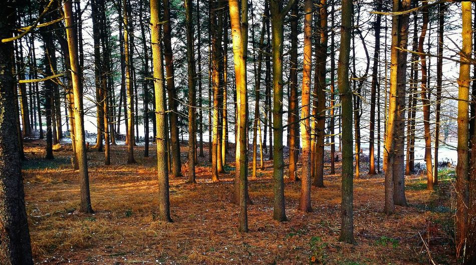 Afternoon light. A Walk In The Woods Streamzoofamily Nature_collection Eye Em Nature Lover