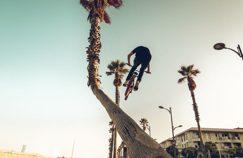 Low Angle View Of Man Doing Stunt With Bicycle By Tree Against Sky
