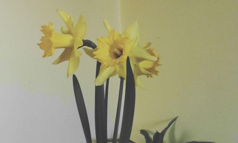 Spring Has Arrived Flowers,Plants & Garden Yellow Yellow Flower Yellowmonday Black&Yellow Naturephotography Spring Flowers