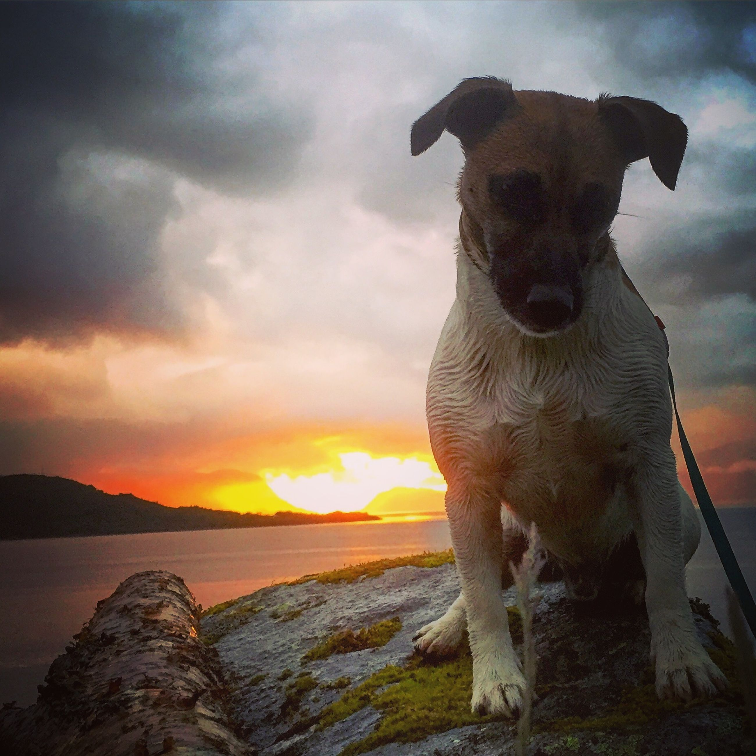 sunset, sky, one animal, animal themes, water, sea, cloud - sky, nature, beauty in nature, rock - object, scenics, tranquility, tranquil scene, orange color, silhouette, outdoors, cloud, no people, horizon over water, dusk