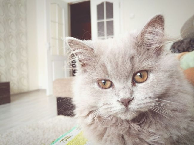 My cat First Eyeem Photo
