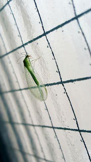 an animal Green