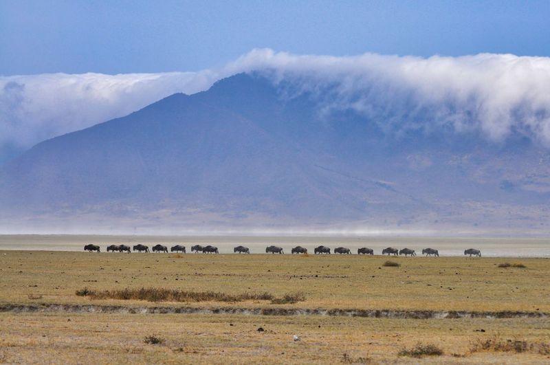 Wildebeest against mountain on landscape