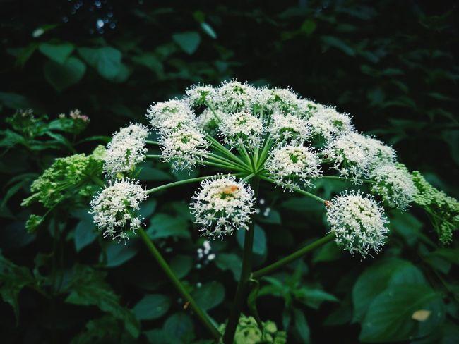 Flower Head Flower Plant Part Botanical Garden Nature Reserve Living Organism Anise Beauty Outdoor Pursuit Leaf
