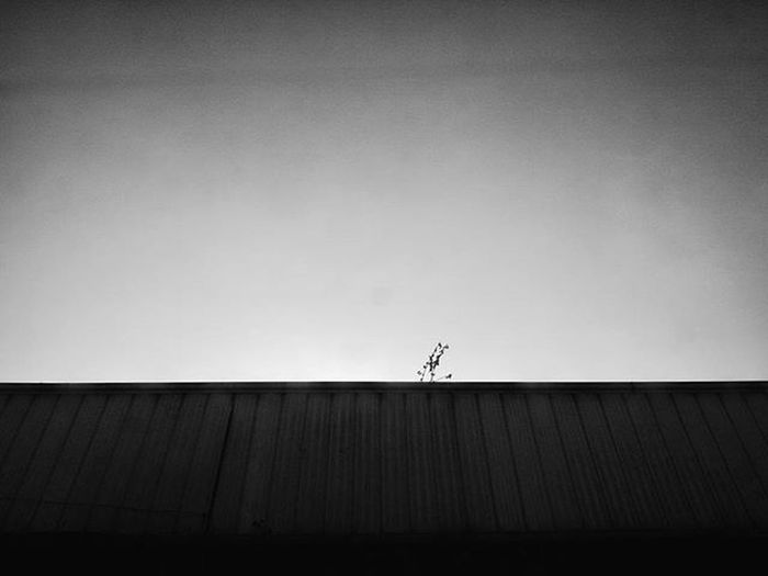 Moodygrams Instamood Instapic POTD Picoftheday Minimalist Roof Plant Gloomy Solitary Longing Existentialism Fotografiaunited GrammerPH VSCO Vscocam VSCOPH Shoot2kill Justgoshoot Mindsofhipster Vscogram Vscopinas