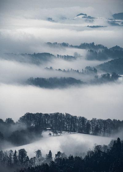 Fog Outdoors Environment Bantiger Tree Tranquil Scene Scenics - Nature Forest Idyllic Landscape Hazy  WoodLand