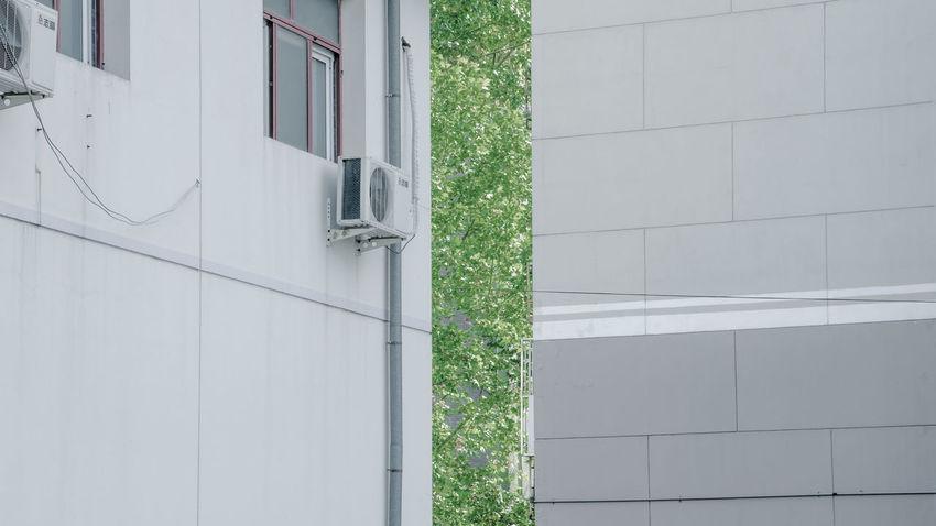融融稍有暖意,遥遥未见春光,等到脱了秋裤,绿荫就透楼墙。 waiting for green. Buildings City Green Leak Leaves Tree Wall