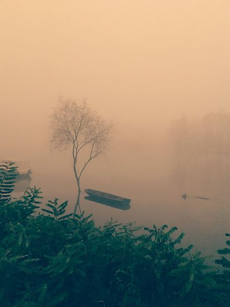 fog First Eyeem Photo