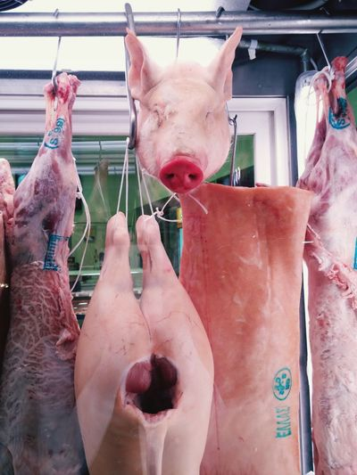 Pigs hanging in slaughterhouse