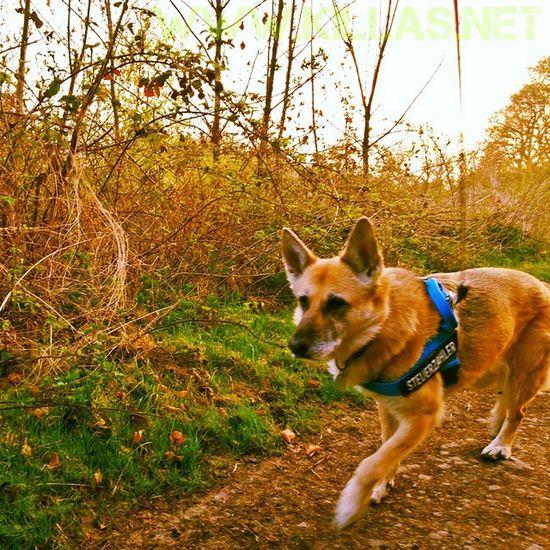 Frühsport Stadtwald  Iserlohn Hund Schäferhund