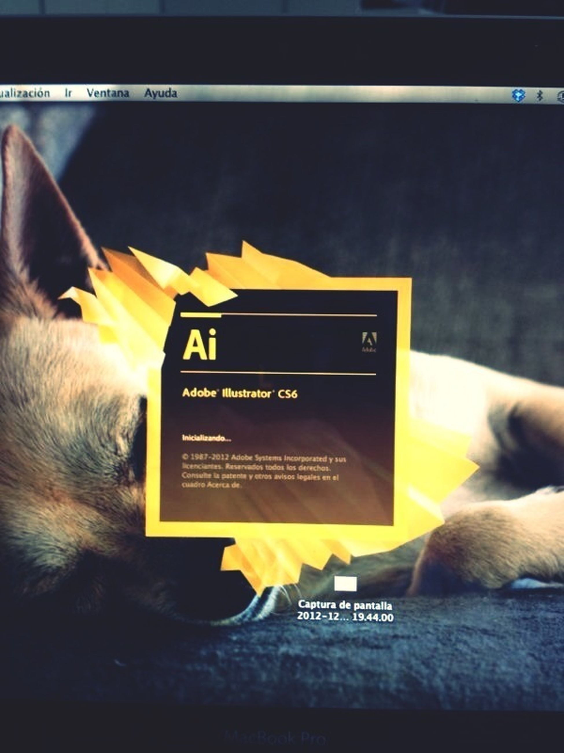 indoors, yellow, transfer print, communication, text, auto post production filter, western script, one animal, pets, close-up, holding, domestic animals, animal themes, part of, person, book, mammal, relaxation