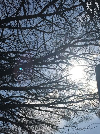 Tree branches, sun penetrating Bare Tree Tree Branch Nature Winter Low Angle View Day Beauty In Nature Sunlight RealCapture EyeEmBestPics South Africa 🇿🇦 Jozi EyeEmNewHere Ntsudzu EyeEm Gallery EyeEm Best Shots Beautiful Beauty In Nature EyeEm Best Shots - Nature Sun Light Through Trees