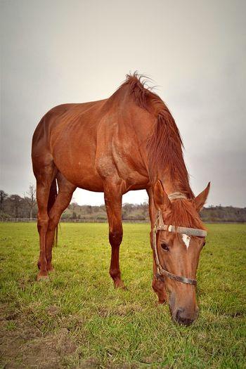 🐴 Mount Juliet Horse Thoroughbred Racehorse Kilkenny Ireland Stud