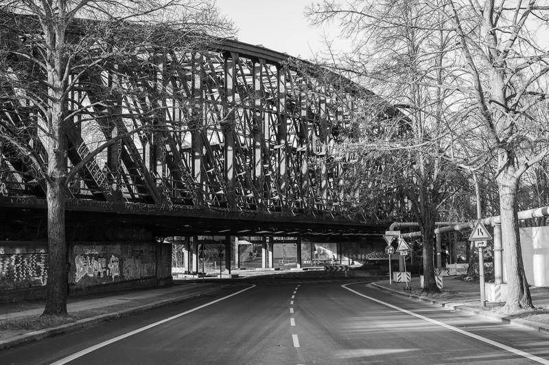 Empty road along trees in city