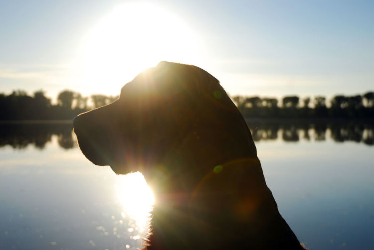 Close-up of dog at lakeshore against sky