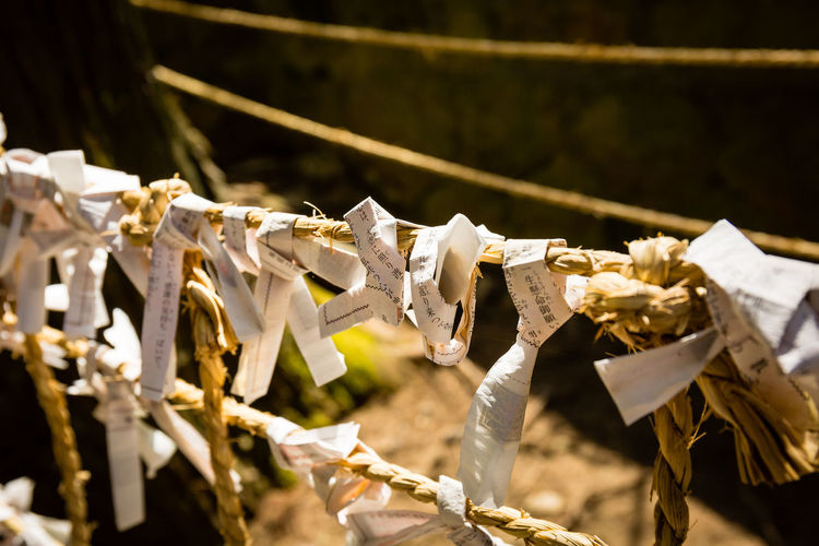 Fortune Day No People Outdoors Hanging Selective Focus Belief Drying Focus On Foreground Rope Large Group Of Objects Spirituality Tied Up Close-up String Textile Paper Religion Fortune Shrine Japan Omikuji Sunny Takayama Lettering Characters Canon Canonphotography EyeEm Best Shots