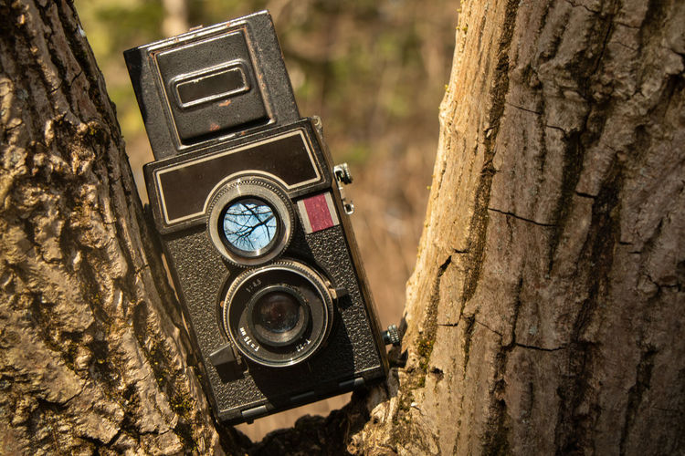 Close-up of camera on tree trunk
