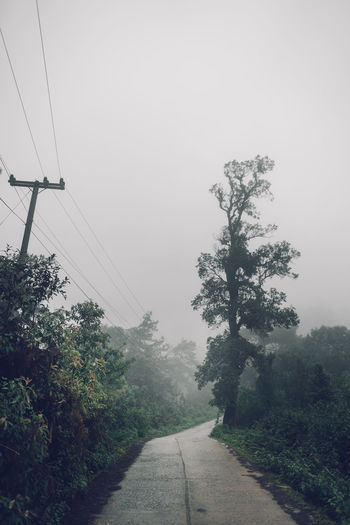 Forest road Fog and rain in the evening Tree Plant The Way Forward Fog Transportation Sky Direction Nature Cable Growth Electricity  No People Road Beauty In Nature Day Power Line  Connection Electricity Pylon Tranquility Outdoors Diminishing Perspective Telephone Line Power Supply