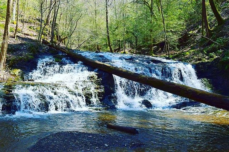 3 of 3: Waterfall on a Spring day. This is the lowest waterfall of the three. Current_challenges Ellijay Theellijays Gilmercounty Inspiredbyadventure Eyeemphoto Yourshot Atlantatrails Wandernorthga Adventureheroes Onebigphoto Exploregeorgia Explorepic Instagram Amazingearthofficial Optoutside @nature.geography Shutterbug_collective Nikonusa Universalviews The_home_front Everything_imaginable Hidden Gems  Rewilding