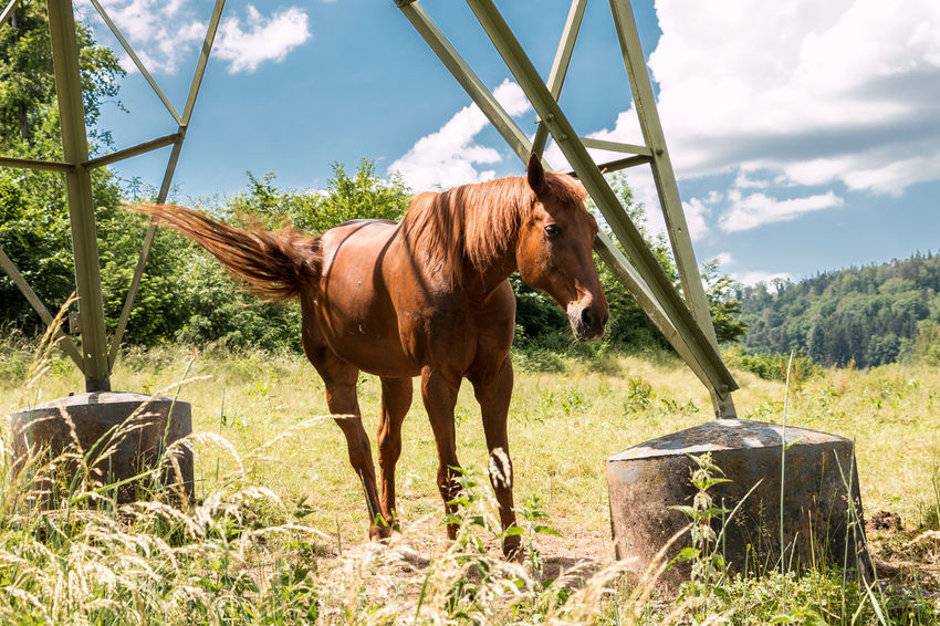 Horses on the green meadow Animal Animal Themes Animal Wildlife Day Domestic Domestic Animals Field Grass Herbivorous Horse Land Livestock Mammal Nature No People One Animal Outdoors Pets Plant Sky Standing Vertebrate