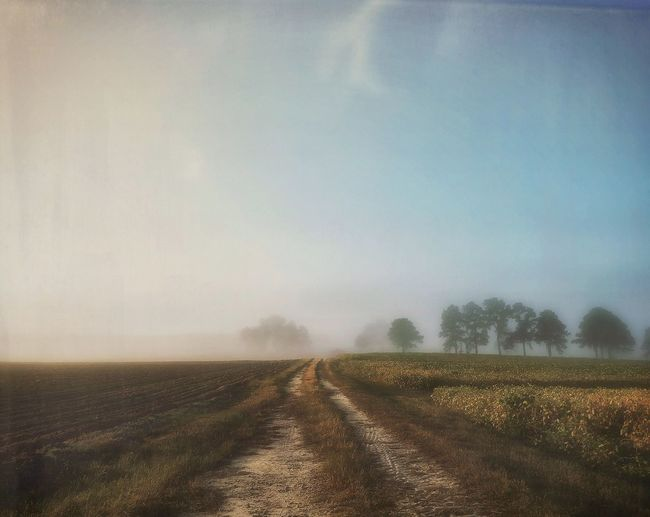 Taking a wonderful walk in the country. Morning Walking Around Solitude Quiet Moments Tranquility Nature Field Landscape Rural Scene Scenics Fog Sky Copse Of Trees Idyllic Autumn Stillness Taking Photos Dew Ethereal Beauty In Nature Farm Textures And Surfaces Daydreaming Sunrise Jessicaselects