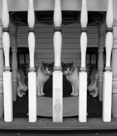 Mirror Image Porch Cats Cat♡ Check This Out Showcase:December EyeEm Best Shots