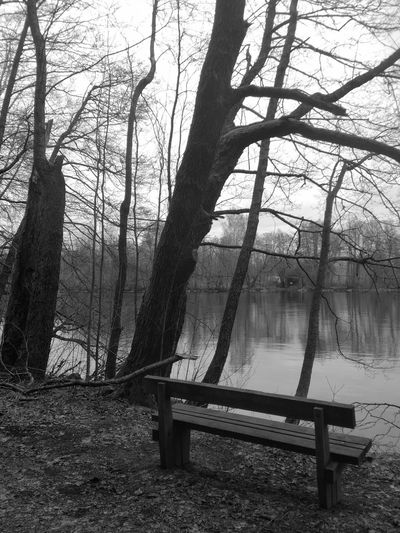 Tree Bench Trunk Nature Tree Trunk Seat Day Tranquility Outdoors No People Wood - Material Forest Riverbank Water Blackandwhite Finland