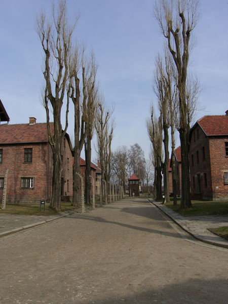 Aushwitz Birkenau Poland Architecture Built Structure Bare Tree The Way Forward Travel Destinations Outdoors Diminishing Perspective Tourism