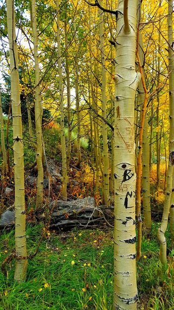 Forest No People Day Tree Yellow Outdoors Nature Close-up Full Frame Autumn Autumn Leaves Tree Leaf Maroonbells