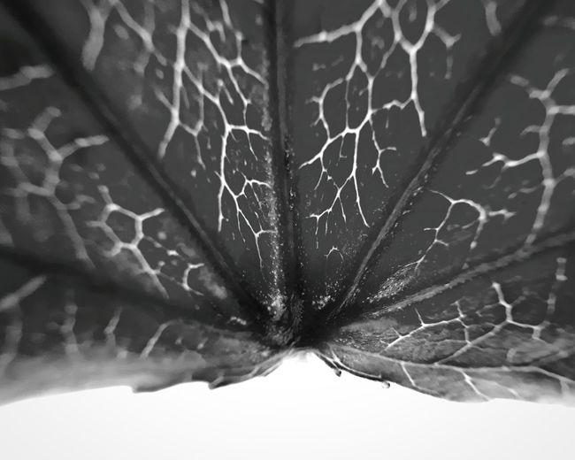 Close-up of spider web on leaf