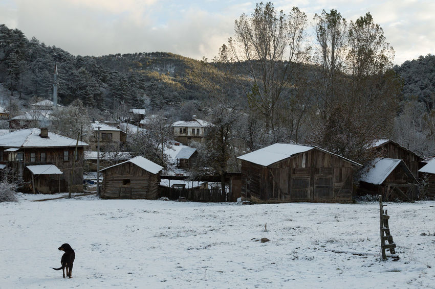 view of the village of Sünnetköy in the Bolu mountains of Turkey with a dog Animal Bolu  Day Dog Home Houses Mountains Nature No People Outdoors Snow Sünnetköy Trees Turkey Village Village View