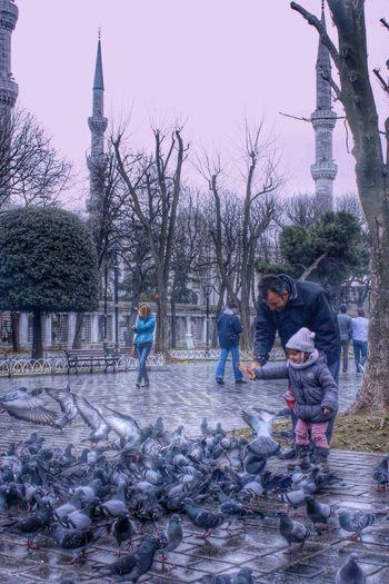 Street Photography Istanbul Street Birds