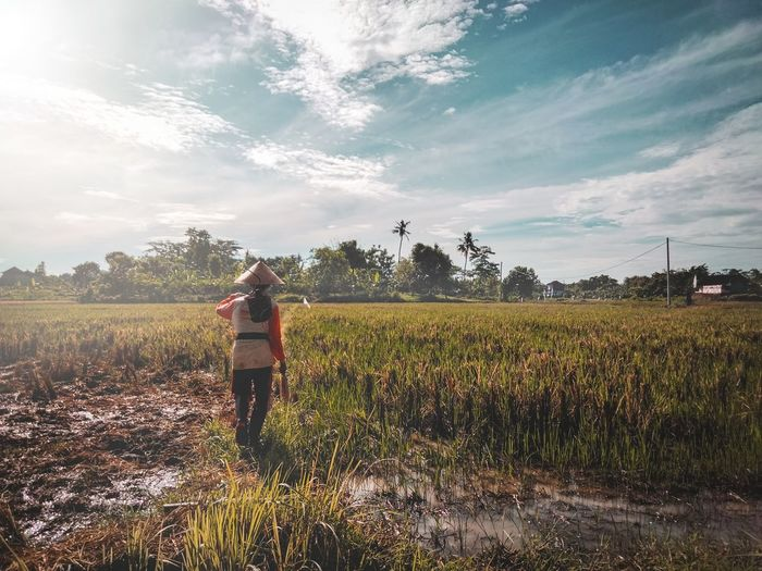 Rear view of man standing on rice fields