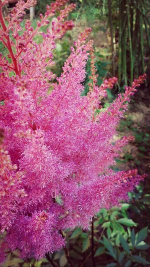 Flowers Beatiful Summer Pink