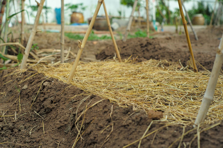 Close-up of dry grass on field